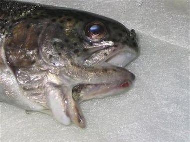 Рыба-мутант
